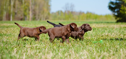 group of puppies outdoors