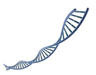 ADN sur fond bl