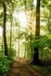 Morgensonne leuchtet in den nebeligen Wald