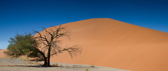Panorama of Dune 45 at Sossusvlei
