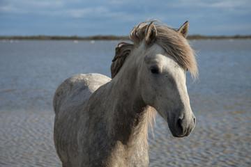 standing stallion