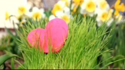 Heart growing in green grass at the garden