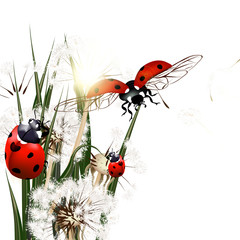 Background with vector green grass, dandelions and ladybirds
