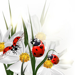 Background with vector scenery cosmos flowers and red ladybirds
