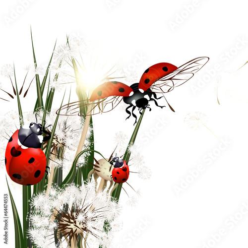 tlo-z-wektorowa-zielona-trawa-dandelions-i-ladybirds