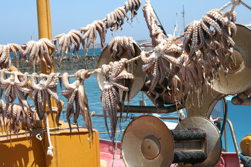 Fishing Boat Octopus Naoussa Paros Cyclades Grece 03