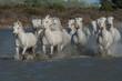 Obrazy na płótnie, fototapety, zdjęcia, fotoobrazy drukowane : running horses