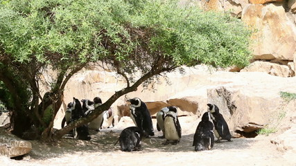 penguins hiding in the shadow of tree