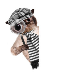 Cat with magnifying glass and searching
