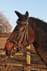 Horse partrait