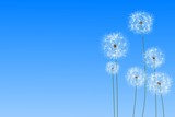 Digitally generated dandelions against blue sky - 64486735