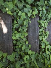 Sendero de maderas entre plantas rastreras.