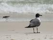Beach Birds-4