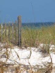 Beach Grass-10