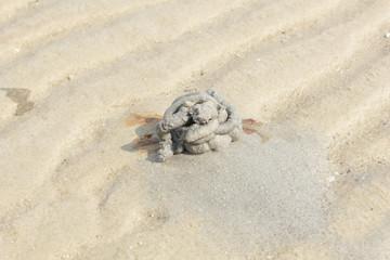 Nest of sea crabs