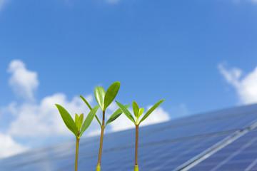 マングローブの新芽とソーラーパネル