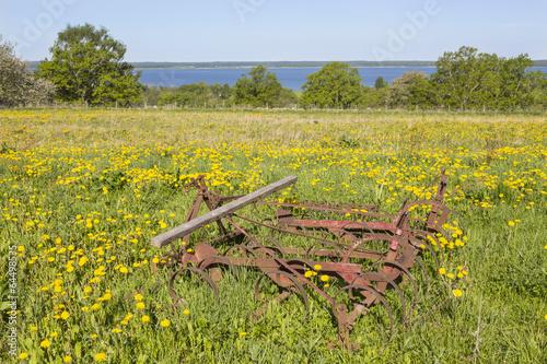Old harrow on a meadow