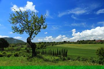 Orto botanico moutan di Vitorchiano