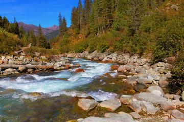 Pastoral in the Alpine stream