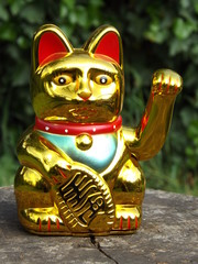 lucky cat in nature
