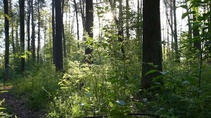 Spring forest. Shot with motorized slider