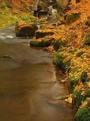 river bank covered with colorful leaves from trees