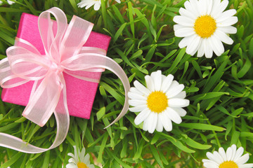 Gift box with ribbon on grass with daisy flowers