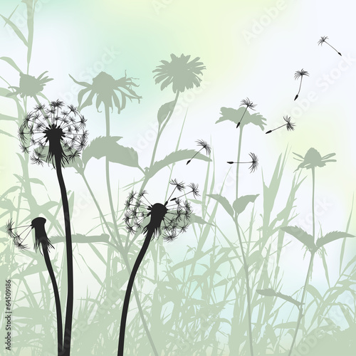 Floral background, dandelion meadow diuring summertime © lakalla