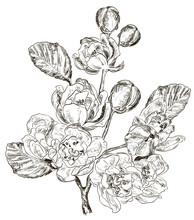 croquis de la Direction générale de la fleur de printemps