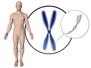 corps homme 3D sur fond blanc avec adn