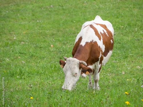Aluminium Koe vache brune et blanche