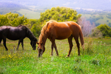 Two beautiful horses in the field