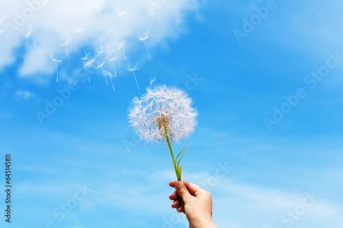 Foto op Plexiglas Paardebloem Dandelion seeds flying up