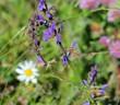 farfalla e fiorellini