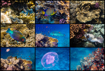 Red Sea reef life