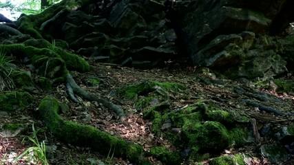 Moosbedeckte Wurzeln