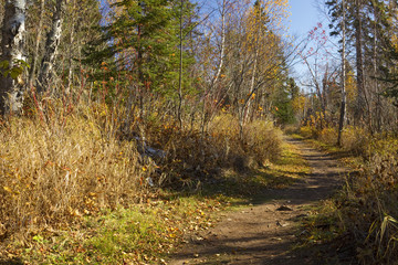 Fall Trail Scenic