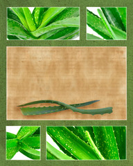 Aloe vera set with paper background