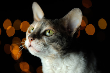 Cute Cat Against Dark Glowing Background