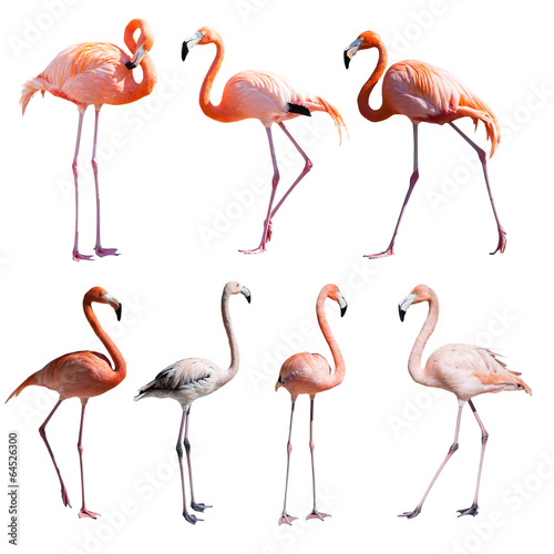 Foto op Aluminium Flamingo Set of Flamingoes. Isolated over white