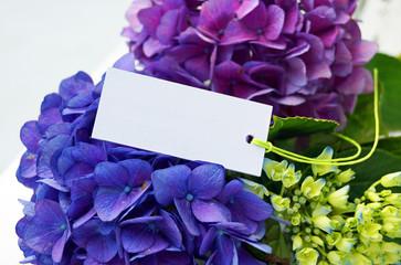 Hortensien mit Etikett
