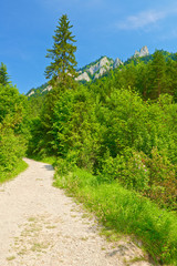 Hiking trail by The Pieniny Mountains. Spring landscape.