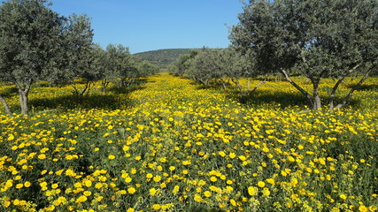 Awsome view from calil north israel