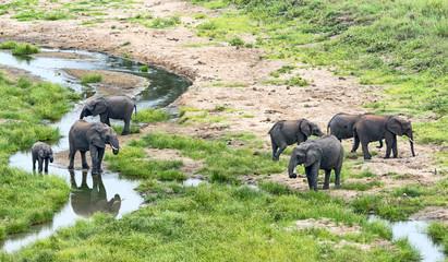 Tansania-Elefant-11856
