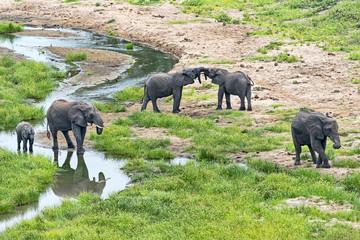Tansania-Elefant-11867