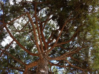 albero marittimo