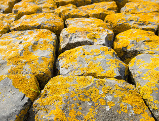Basalt blocks with yellow lichen overgrown