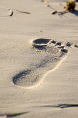 Fußabdruck im Sand