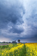 dramatic stormy sky over rapeseed flower field