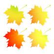 Autumn maple leaves. A set.